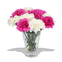 10 Pink n White Carnations in Vase: Gifts for Mothers Day
