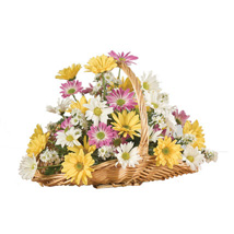 A Daisy A Day: Gift Delivery in Toronto