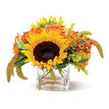 Country Sunflowers CND: All Flowers