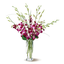 Dendrobium Orchids: Flower Arrangements