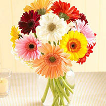 Multi Color Gerberas in Vase: Send Thank You Flowers to Canada