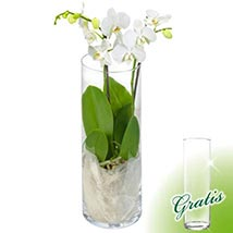 Serene Orchid Tale: Plants