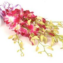 Orchids INDO: Indonesian Gifts