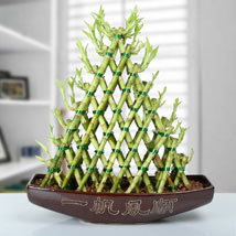 Exotic 8 Layer Lucky Bamboo Pyramid: Plants - Green Gifts