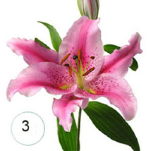 3 Lilies of Affection QAT: Send Flowers to Qatar Doha