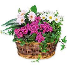 Happy days SUAR: Flowers to Saudi Arabia