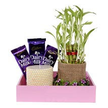 Pink Wooden Tray Combo UAE: Buy Plants in Dubai, UAE