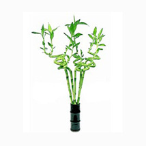 Spiral Heart Arrangement: Buy Plants in Dubai, UAE