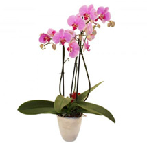 Elegant Orchid: Wedding