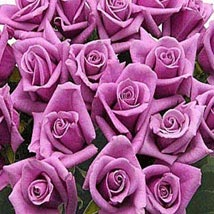 100 Long Stem Lavender Roses: Send Flowers to Chicago