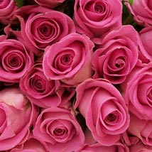 100 Long Stem Pink Roses: Same Day Flower Delivery in Cary
