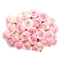 25 Long Stem Pink Roses: Send Flowers to Columbus