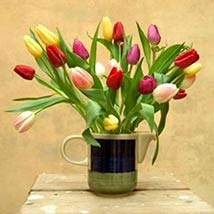 30 Assorted Tulips: Valentine Day Gifts Boston