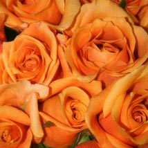 50 Long Stem Orange Roses: Send Flowers to Cary