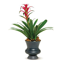 Blooming Bromeliad: Send Plants to USA