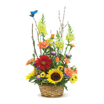 Butterfly Garden USA: Send Flowers to San Diego