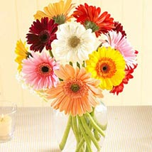 Multi Color Gerberas in Vase: Same Day Flower Delivery in Cary