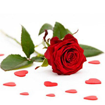 Single Red Roses: Send Gifts to Philadelphia