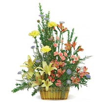 Sunshine Basket: Send Carnations Flowers to USA